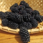Deconstructed Blackberry Pie