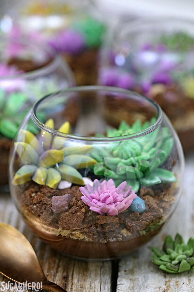 Edible Terrariums - close-up of edible terrarium with fondant succulents on top | From SugarHero.com