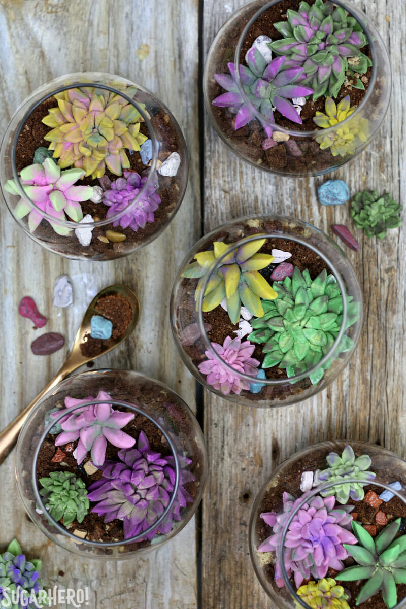 Edible Terrariums - group of edible terrariums and fondant succulents shot from overhead | From SugarHero.com