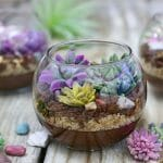 Edible Terrariums with Chocolate Pudding