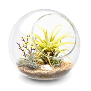 Terrarium Glass Globe